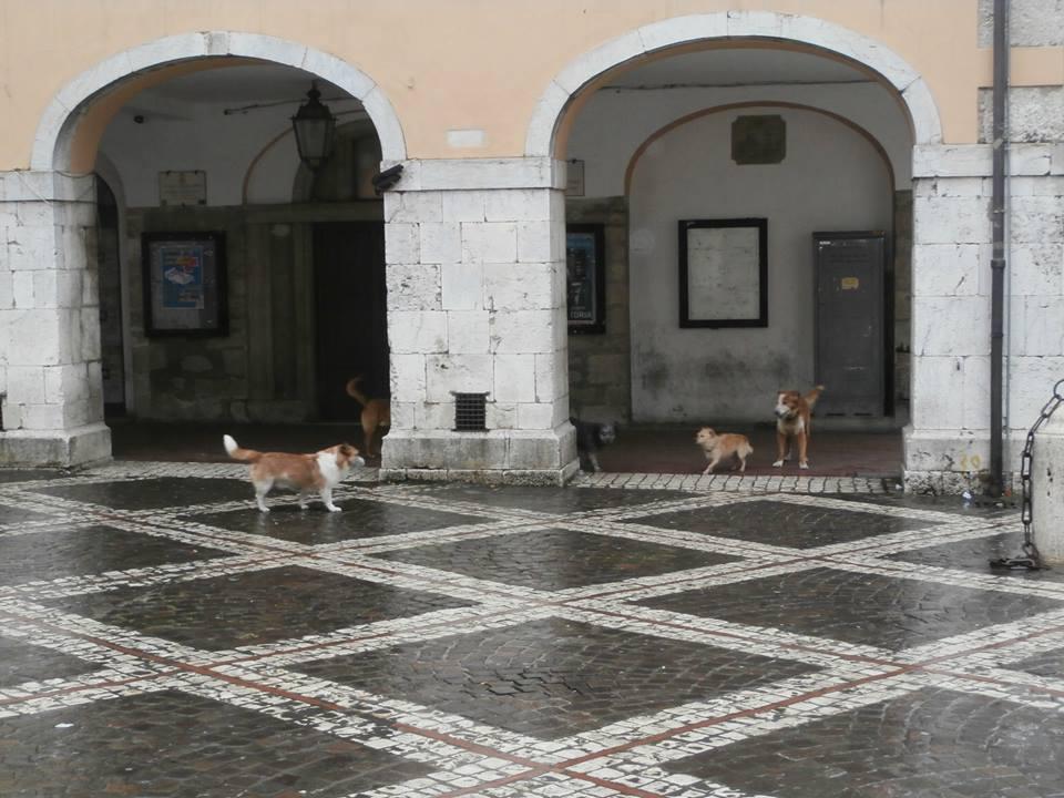 Cani Veroli