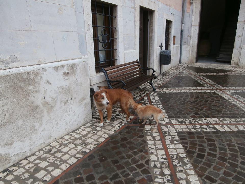 Cani comune