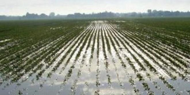 Maltempo in Ciociaria, aiuti agli agricoltori