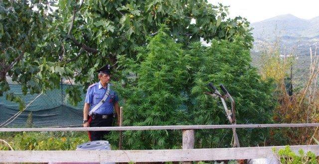 Coltiva marijuana in mansarda, arrestato in Ciociaria