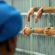 """Frosinone-""""Scoppia il carcere, incolumità a rischio"""""""