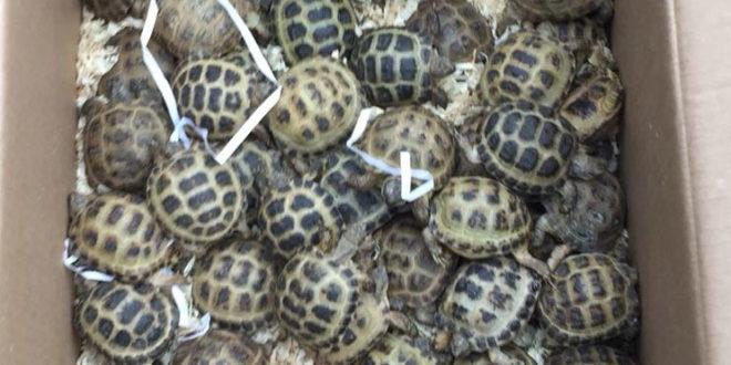 Frosinone, maxi sequestro di cani e tartarughe