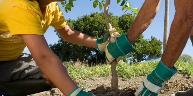 Nuovi alberi a Cassino, circa 100 piante