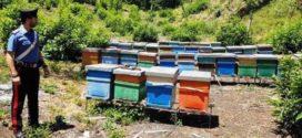 Tragedia in Ciociaria, muore punto dalle api