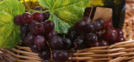 Sagra dell'uva, festa in Ciociaria