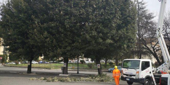Frosinone, potatura alberi in tutto il capoluogo